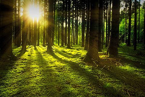 Umweltschonung, Umwelt, Energieeinsparung, Ressourcen schonen, umweltschonend heizen